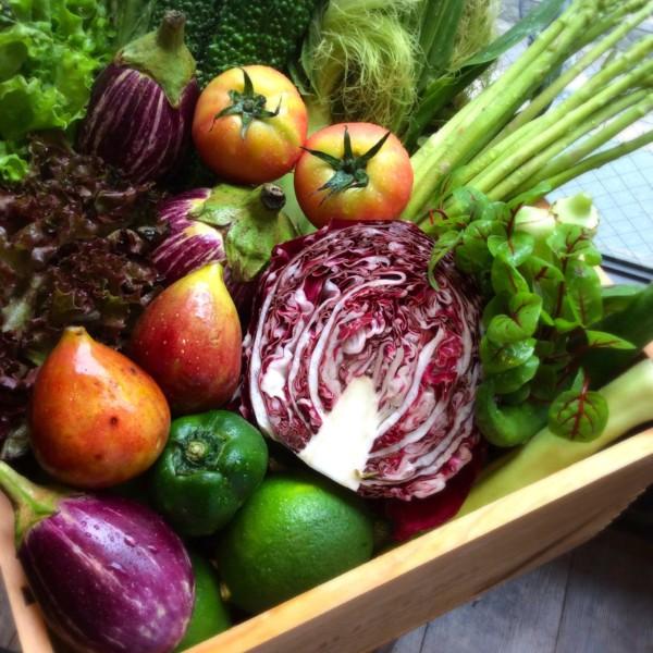 糸島半島の自社農園野菜&果実